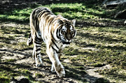 The Tiger Metal Prints - Tigger Metal Print by Bill Cannon