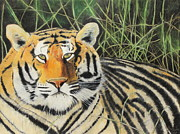 Big Cat Pastels Posters - Tigress Poster by Jeanne Fischer
