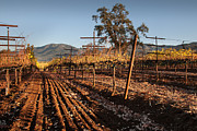 Kent Sorensen - Tilling the Vineyards