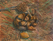 Canebrake Posters - Timber Rattlesnake Poster by ACE Coinage painting by Michael Rothman