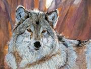 Popular Paintings - Timber Wolf by David Lloyd Glover
