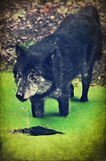 Wild Animal Mixed Media Posters - Timberwolf Poster by Angela Doelling AD DESIGN Photo and PhotoArt