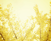 Yellow. Leaves Framed Prints - Time After Time Framed Print by Amy Tyler