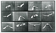 Tony Rubino - Time Lapse Motion Study...