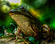 Bokeh Photo Posters - Time Spent With The Frog Poster by Bob Orsillo