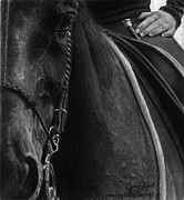 Dressage Drawings - Time to process by Janicia West