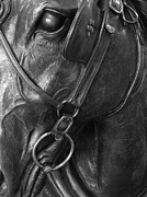 Blinders Prints - Timeless Stallion Print by Elizabeth Sullivan