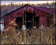Tin Roof Framed Prints - Tin Roof Rusted Framed Print by Bill Cannon