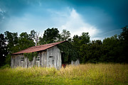 Tin Roof Prints - Tin Roof...ivy Covered Barn Print by Shane Holsclaw