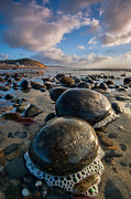Torrey Pines Framed Prints - Tiny Giants Framed Print by Peter Tellone
