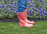 Blooming Photo Prints - Tip Toe Through The Tulips Print by Juli Scalzi