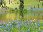 Mount Washington Mixed Media Prints - Tipsoo Lake - Mount Rainier National Park Print by Photography Moments - Sandi