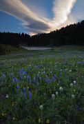 Wildflowers Photo Posters - Tipsoo Sunrise Poster by Mike  Dawson