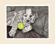 Pen And Ink Drawings Framed Prints - Tired puppy Tired Puppy Framed Print by Jack Pumphrey