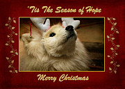 Dogs Digital Art Metal Prints - Tis The Season of Hope Merry Christmas Metal Print by Lois Bryan