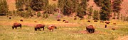 Country Dirt Roads Photos - Title  Where The Buffalo Roam of Course by John Malone