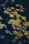 Yellow Leaves Metal Prints - To Have You Near Metal Print by Laurie Search