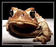 Sofranko Framed Prints - Toad thinking What do YOU want Framed Print by Rose Santuci-Sofranko