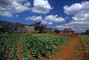 James Brunker - Tobacco Farm