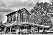 Wooden Barns Posters - Tobacco Road BW Poster by JC Findley