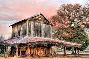 Wooden Barns Prints - Tobacco Road Print by JC Findley