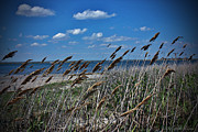 Mikki Cucuzzo Metal Prints - Tobay Beach LI Metal Print by Mikki Cucuzzo