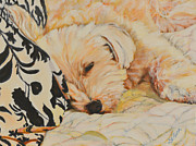 Tobi Sleepy Head Print by Deborah Fisher