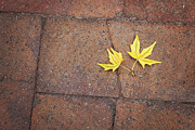 Terry DeLuco - Together Yellow Maple Leaves