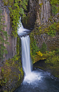 Loree Johnson Framed Prints - Toketee Falls Framed Print by Loree Johnson