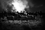 Deer Silhouette Prints - Tomales Bay Harem Under The Midnight Moon - 7D21241 - Black and White Print by Wingsdomain Art and Photography