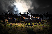 Tule Elk Photos - Tomales Bay Harem Under The Midnight Moon - 7D21241 by Wingsdomain Art and Photography