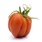 Tomato Print by Bernard Jaubert