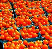 Tomato Squares Print by Mamie Gunning