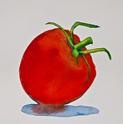 Vegetables Paintings - Tomato Study by Jani Freimann