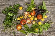 Garden Grown Prints - Tomatoes and herbs Print by Elena Elisseeva