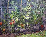 Ylli Haruni - Tomatoes in Viola