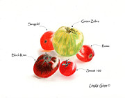 Tomato Drawings Framed Prints - Tomatoes Framed Print by Linda Ginn
