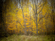 Autumn Prints Mixed Media Posters - Tones Of Yellow Poster by Connie Dye