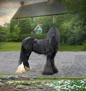 Gypsy Vanner Digital Art - Tonka by Fran J Scott