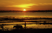 Cambodia Prints - Tonle Sap Sunrise 01 Print by Rick Piper Photography