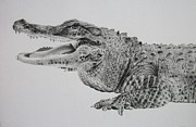 Reptiles Drawings Prints - Toothy Grin Print by Daniel Diehl