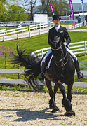 Kentucky Horse Park Photo Prints - Top Hat and Tails Print by Wayne Stacy