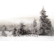 Snow Covered Trees Posters - Top of Canaan in Winter Poster by Shane Holsclaw