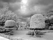 Monotone Photo Prints - Topiary Print by Terry Reynoldson