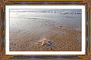 Topsail Island The Only One Print by Betsy A  Cutler