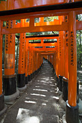 Torii Photos - Torii gates of Inari Shrine by David Bearden