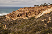 Cliff Lee Metal Prints - Torrey Pines Razor Point 1 Metal Print by Lee Kirchhevel