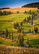 Italian Cypress Photo Acrylic Prints - Toscana Strada Acrylic Print by Inge Johnsson