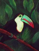 Black Pastels Framed Prints - Toucan Framed Print by Anastasiya Malakhova