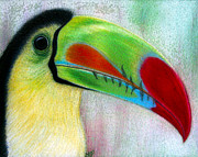 Rain Drawings - Toucan by Jo Prevost